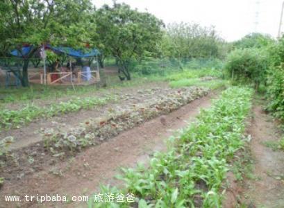 綠仁農場 - 景點展示