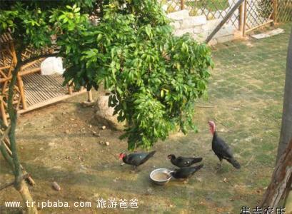 集志农庄 - 景点展示