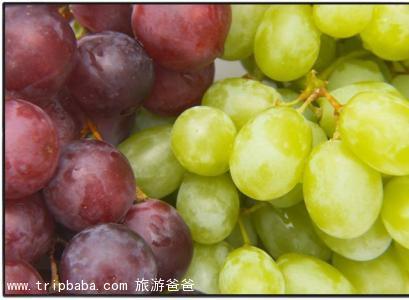 葡萄采摘 - 景點展示