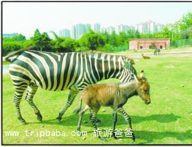 動物園 - 景點展示