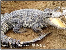 南顺鳄鱼园 - 景点展示