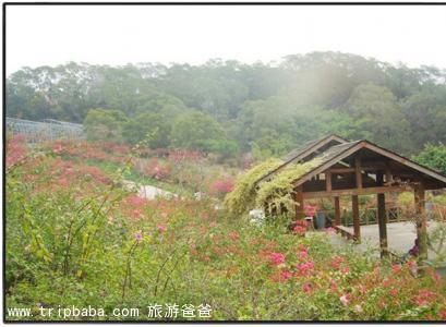 東坪山公園 - 景點展示