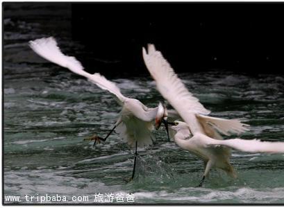 白鹭洲公园 - 景点展示