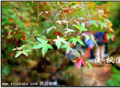 流枫溪 - 景点展示