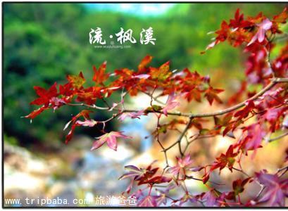 流楓溪 - 景點展示