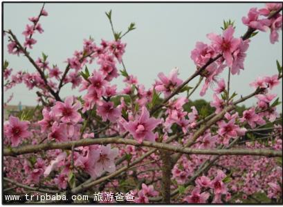 桃花谷 - 景点展示