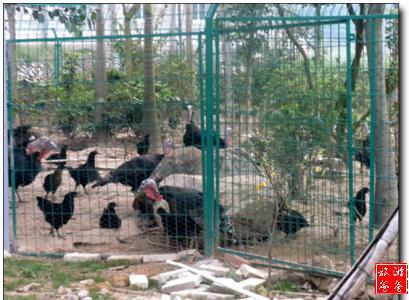 鹰坑谷农家乐 - 景点展示