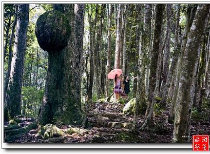 龙岩竹安寨 - 景点展示