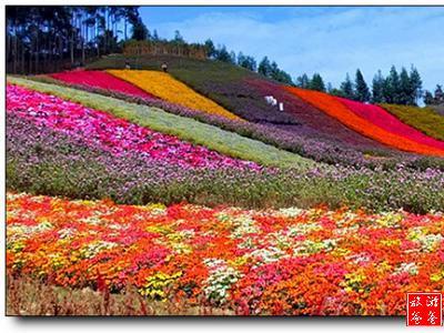 乡村风景图片花瓣网
