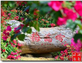 【厦门活动】徙步穿越金榜山、梅海岭赏三角梅、体验怪坡交友互动1日游