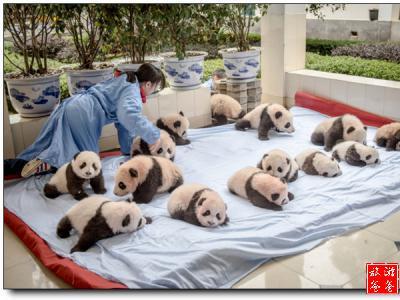 中西方动物文化差异
