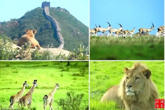 北京八达岭野生动物世界在哪里