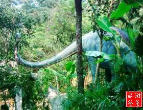 【周末出游】野山谷热带雨林叠瀑观光+午餐+玻璃吊桥/栈道一日游[每周六]