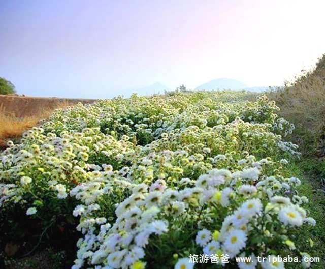 高鋤山 - 景點展示
